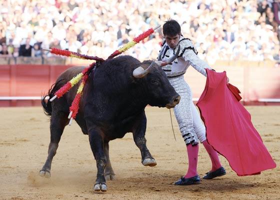 El astado levanta la cara ante el maestro Salvador Vega.  Foto: Juan Carlos Muñoz