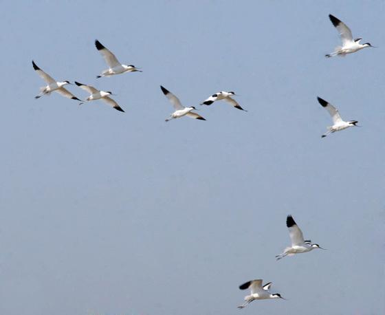 Conjunto de aves sobre el espacio aéreo de la piscifactoria.  Foto: Belén Vargas