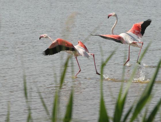 Flamencos sobre el río.  Foto: Belén Vargas