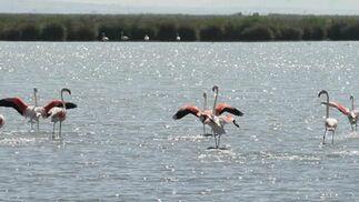 Multitud de aves sobre el Guadalquivir.  Foto: Belén Vargas