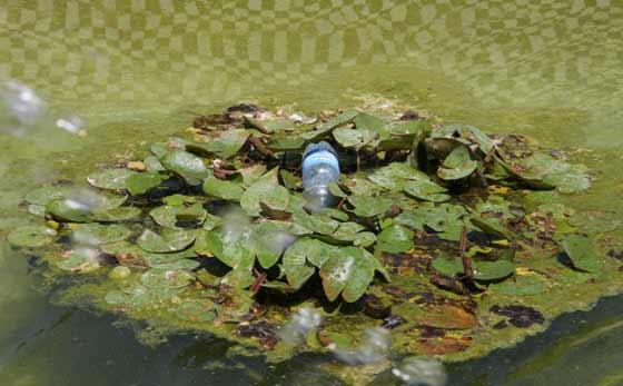 Una botella de plástico en un estanque.  Foto: B.Vargas