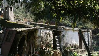 Los cuatro hermanos Mascones sobreviven en el parque de Los Alcornocales ajenos a cualquer atisbo de modernidad  Foto: Manuel Aragón Pina
