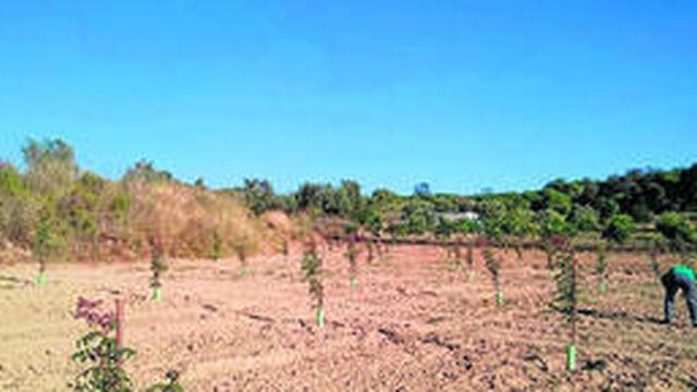 El pistacho se abre camino en El Condado