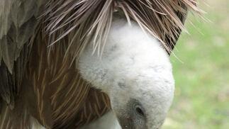 Centro de especies protegidas CREA-CEGMA