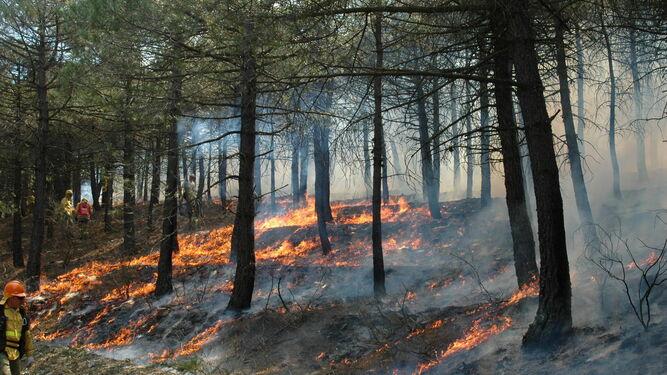 Efectivos del Plan Infoca vienen realizando quemas científico-técnicas en los montes y sierras almerienses dentro de su plan de formación.