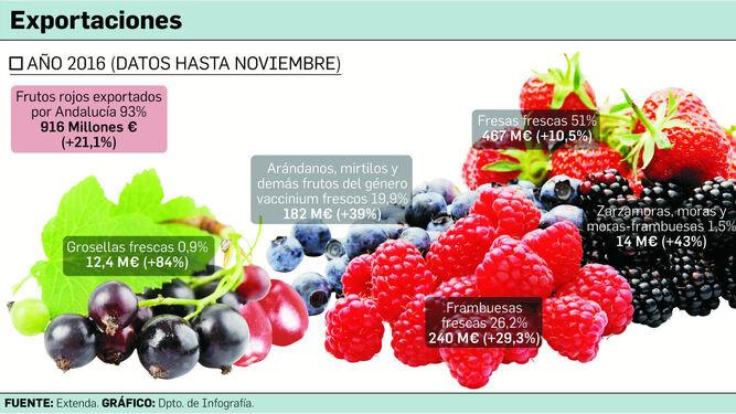 La exportación de frutos rojos sube un 21,1% y refuerza el liderazgo de Huelva