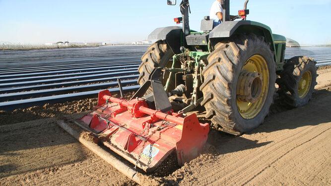 Un operario  trabaja sobre el terreno de una finca fresera para dejar lista la superficie antes de la plantación de la fruta.