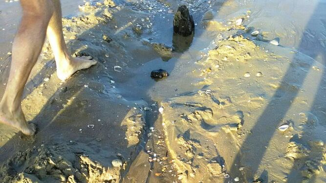Los restos localizados en la orilla, al descubierto.