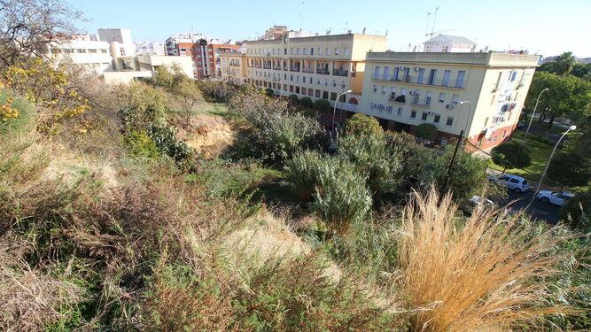 Abundante vegetación en el cabezo de la Joya, en la parte de la elevación que da a la calle Adoratrices.