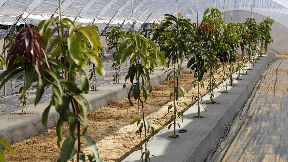 Inauguración de la finca experimental de  Onubafruit