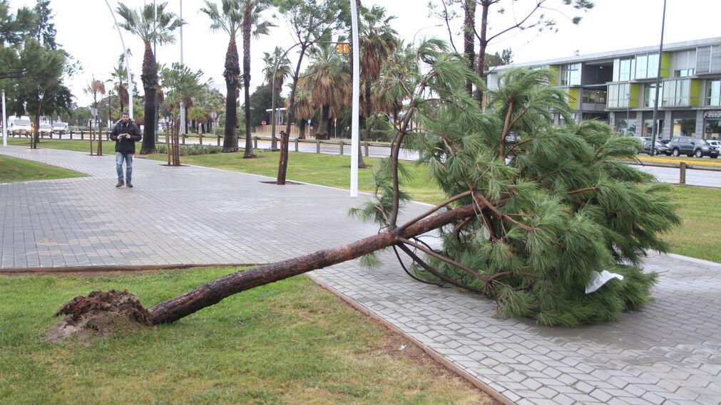 Consecuencias del temporal de lluvia y viento a su paso por la capital