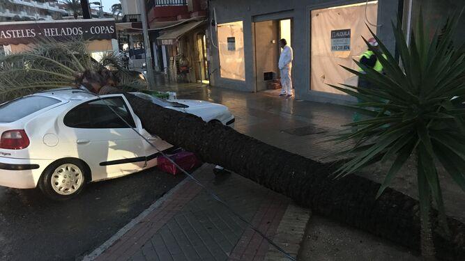 Palmera caída sobre un vehículo en la Avenida de Andalucía de Punta Umbría