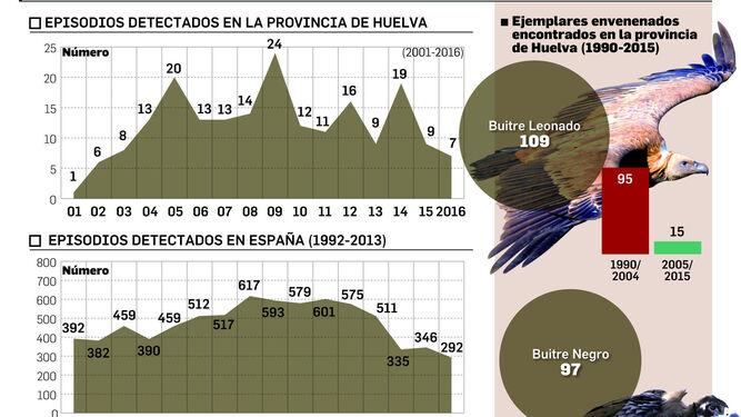 Cadáver de buitre negro envenenado encontrado en la provincia por los técnicos de Medio Ambiente.