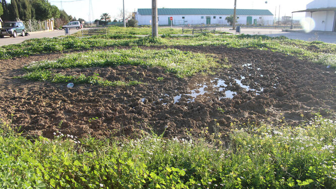 Estado que presentan las zonas comunes situadas a la entrada de la barriada de La Alquería, llenas de lodo y de hierbas.