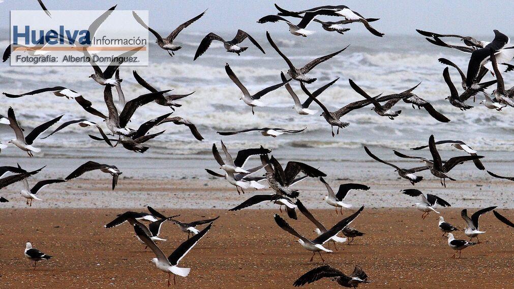 Imágenes del temporal de viento y lluvia en la playa de Punta Umbría