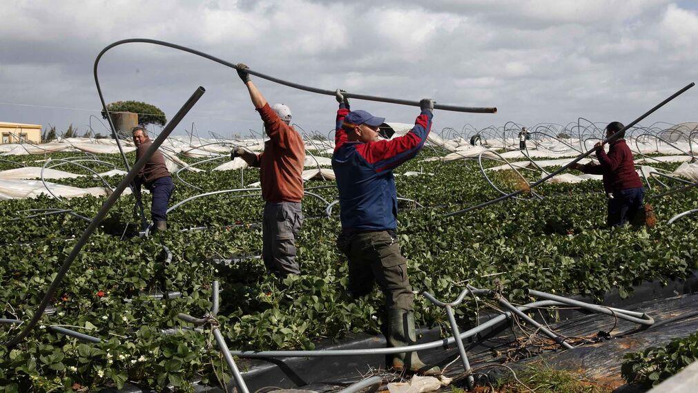 Efectos del Tornado en las plantaciones de agricultores de Lepe y Cartaya