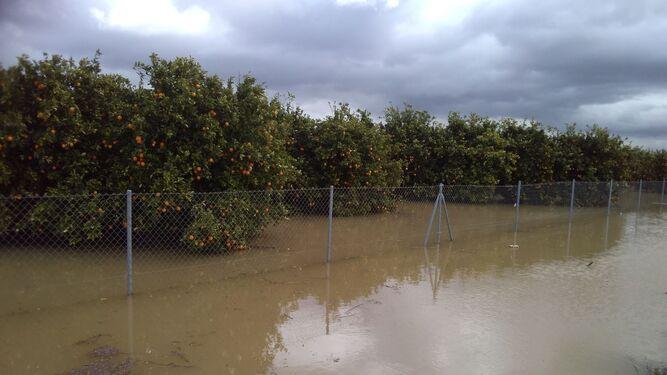 Los campos han quedado inundados, como pueden verse en la imagen, y la situación está causando graves daños.