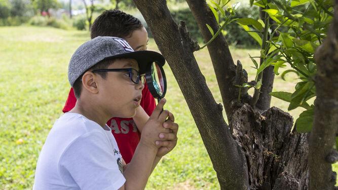 Un niño mira con una lupa un árbol.